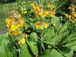 plants for rock gardens plants for oriental garden home design u0026 architecture cilif com