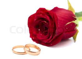 red rose rings images Red rose with wedding rings on a white background stock photo jpg