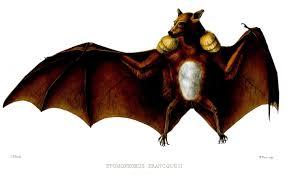 list of bats wikipedia