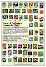 arkansas native plants ecoregions kansas native plant society