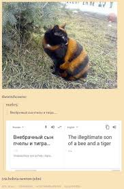 Meme Translation - these poorly translated russian cat memes will make you pee from