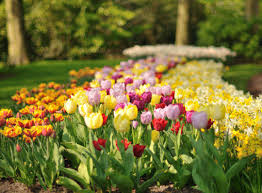 keukenhof flower gardens hop on hop off keukenhof 2018 tickets holland