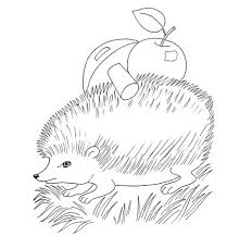 Hedgehog With Apple And Mushroom Coloring Page Free Printable Woodland Animals Coloring Pages