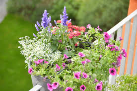 topfpflanzen balkon urlaubsbewässerung ohne wasserhahn topfpflanzen und blumenkästen