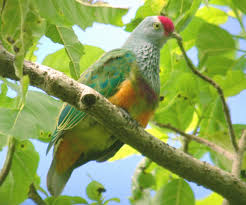 Canopy Birds by The Birds