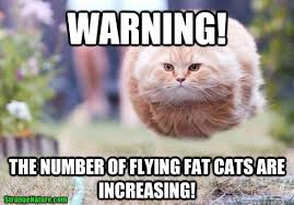 Cute Cat Meme Generator - warning the number of flying fat cats are increasing fat cat