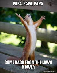 Lawn Mower Meme - papa papa papa come back from the lawn mower happy squirrel