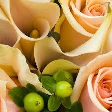 Peach Flowers Shop For Wholesale Flowers By Color