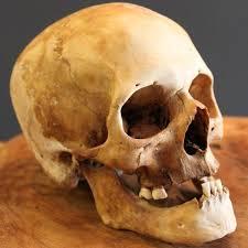 Human Anatomy Skull Bones Best 25 Real Skull Ideas Only On Pinterest Skull Reference