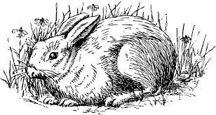 vintage bunny clip art 53