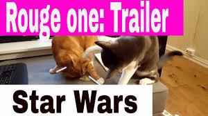 Star Wars Cat Meme - rogue one trailers star wars cats jedi cats cat star wars