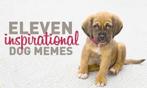 Meme Dog - 11 inspirational dog memes my cinema lightbox