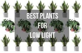 apartment plants a plant guide for apartment problems four walls by rentler