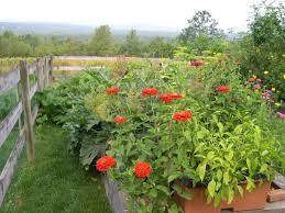 harriet u0027s vegetable garden in maine finegardening