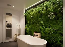 Plants To Keep In Bathroom Best Plants That Suit Your Bathroom Fresh Decor Ideas
