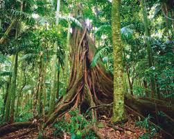 australian forests an introduction steve parish nature connect