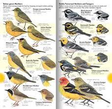 Nevada birds images Sierra birds a hiker 39 s guide field guide john muir laws jpg