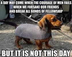 Silly Dog Meme - not this day the funniest dog memes