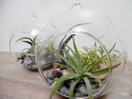 Build Your Own Indoor Garden - hanging globe terrarium kit air plants build your own glass