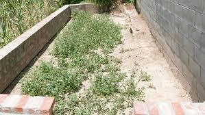 How To Start A Flower Garden In Your Backyard How To Start A Raised Bed Veggie Garden Sunset