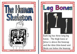 ks1 and ks2 science teaching resources posters for classroom