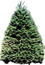 carroll u0027s country christmas tree farm u cut or pre cut christmas