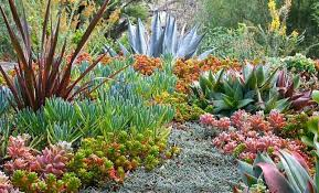 Succulent Gardens Ideas A Colorful Succulent Garden