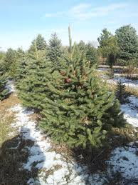 cut your own christmas tree in the lake geneva area