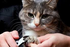 ask a vet how to trim cat claws and why you should catster