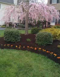 how to prep for mulching around tree beds faqs roundup in