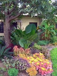 Tropical Landscaping Ideas by 282 Best Tropical Landscape Images On Pinterest Plants Flower