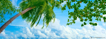 palm tree and clouds covers