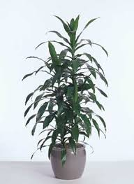 best plants for air quality the false truth on the 12 best plants to improve indoor air quality