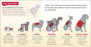 Comfort Dogs Certification Emotional Support Animal Registration Us Support Animals