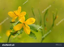 summer flower stock photo 29530816 shutterstock