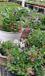 groff u0027s plant farm kirkwood lancaster county flowers gardens plants