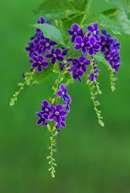 581 best flowers plants lovely flowers images on pinterest
