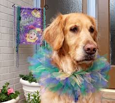 mardi gras dog mardi gras merrier with marsh dog thek9harperlee