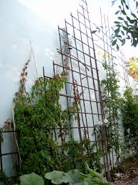 Ideas For Metal Garden Trellis Design Metal Garden Trellis Designs Lovely Decor Concrete Walls And Metal