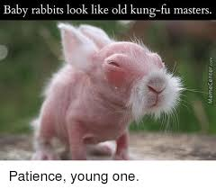 Fu Meme - baby rabbits look like old kung fu masters patience young one meme