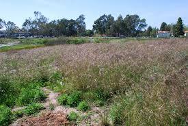 grassland native plants grassland ccber