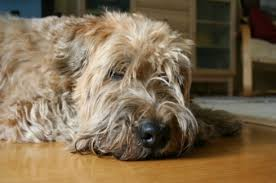 dog and hardwood floors removing pet urine stains from hardwood floors thriftyfun