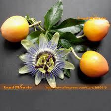 aliexpress com buy passiflora seeds passion fruit passion