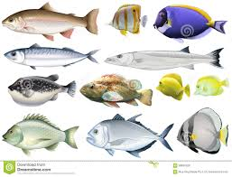 different kind of ocean fish stock vector image 58834329