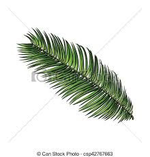 clip art vector of full fresh leaf of sago palm tree sketch