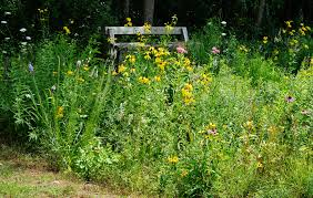 native plant garden small corner native plant garden