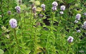 les herbes aromatiques en cuisine herbes aromatiques en cuisine with herbes aromatiques en cuisine