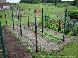 How To Grow Green Beans On A Trellis Grow Pole Beans For Easy Picking And Preserving