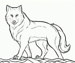 wolves coloring pages animal wolf baby wolf coloring pages