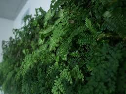 self watering vertical planters self watering vertical gardens by matt rabinovitch